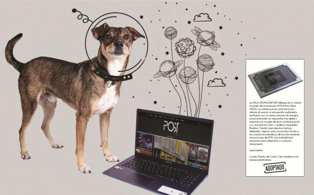 laptop Perritos y artículos must-have: Una galería que te enamorará