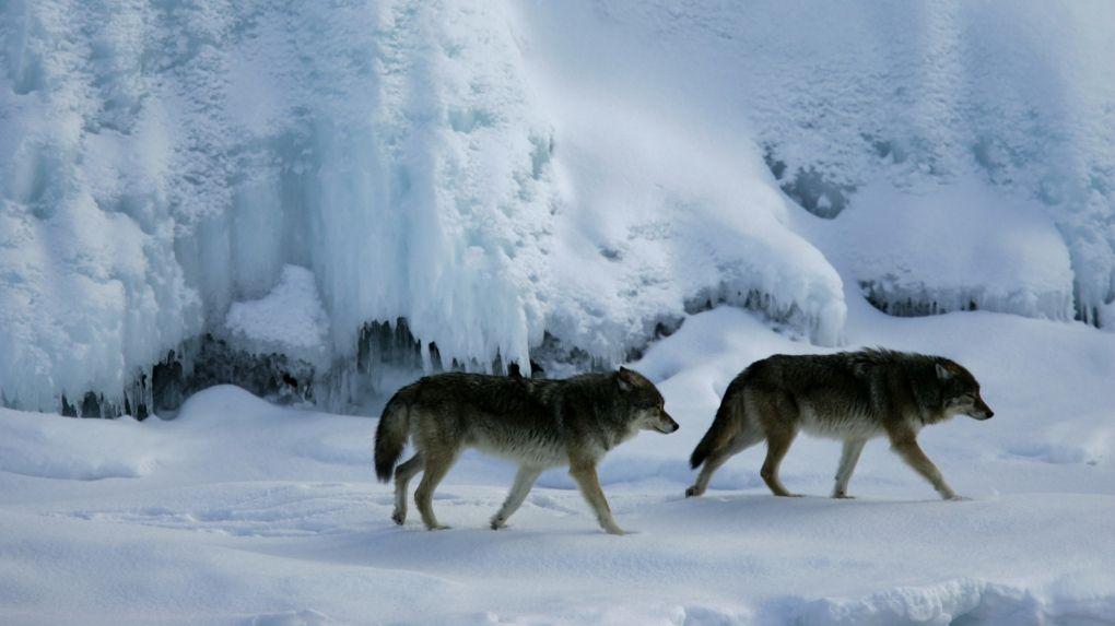 Animales fantásticos de Canadá y dónde encontrarlos