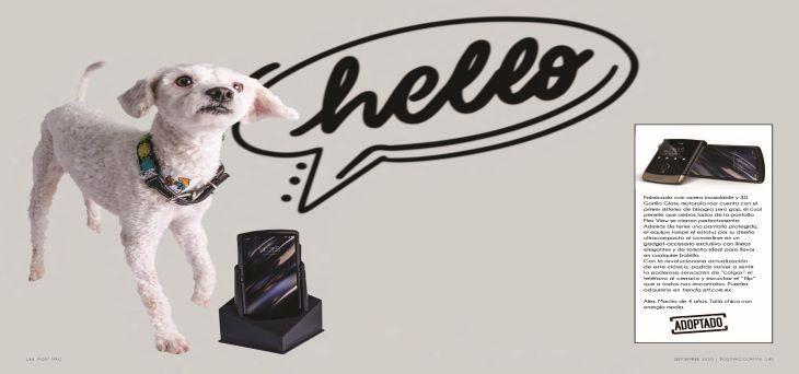 motorola Perritos y artículos must-have: Una galería que te enamorará